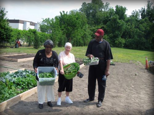 Picking Vegetables From the Community Garden
